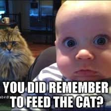 Baby On The Phone Meme - incredible cat and baby meme for your wall lovebird