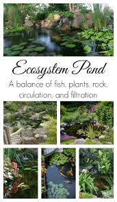 Aquascape Environmental Is Your Pond Eco Friendly Aquascape Inc