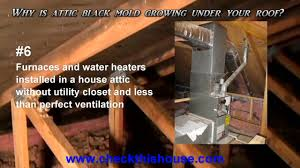 black mold in attic why is it attic mold growing under your roof