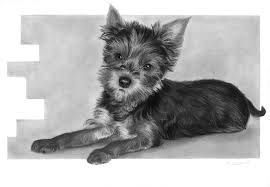 cute dog pencil drawing by thubakabra on deviantart
