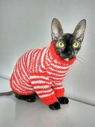 sphynx sweaters so sphynx cat clothes sphynx cat sweater small clothes