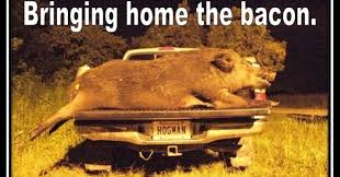Hog Hunting Memes - these top 10 hunting memes will start your season off right pics