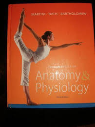 Essentials Of Human Anatomy And Physiology Notes Anatomy And Physiology Textbooks Education Ebay