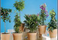 balkon und terrassenpflanzen paidi bett umbauen betten hause dekoration bilder qaoeqwyoqr
