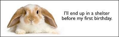 rabbit banner easter rabbits rabbit rescue