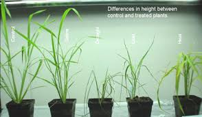 how does light affect plant growth activity 7 effect of environment on plant growth