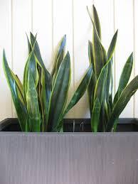 fresh beautiful indoor plant ideas for eco friendly 23201 modern