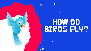 how do birds fly interesting facts about birds for kids youtube