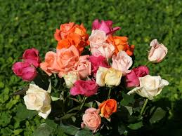 roses wallpapers colorful roses rose bouquet wallpaper