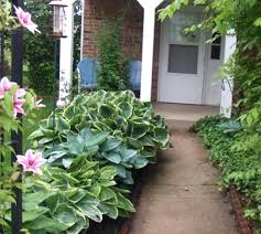 plants for the front yard best 25 small front yard landscaping