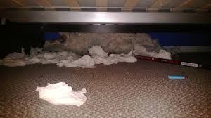 under the bed of a common funnyjunker