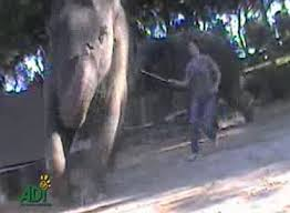 Blind Men And The Elephant Story For Children Water For Elephants Star Electrocuted And Beaten With Hooks