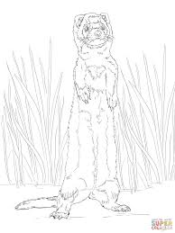 ferret standing coloring free printable coloring pages