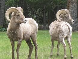 Colorado wildlife images Top spots for wildlife viewing in colorado cbs denver jpg