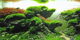 Aquascape Design Understanding Taiwanese Aquascaping Style The Aquarium Guide