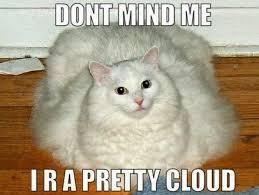 Cats Meme - cat memes purrfect love