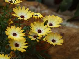 flower natural bright blooms colorful photography vivid cute