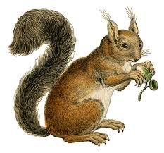 red squirrel clipart printable pencil and in color red squirrel