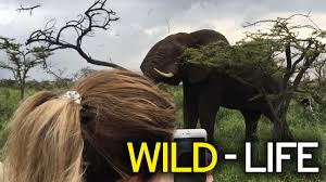 jeep life quotes violent elephant almost kills passengers in safari jeep after