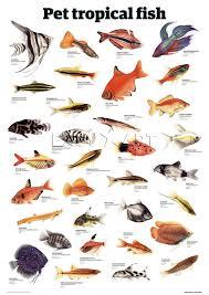 pet fish names list 2017 fish tank maintenance