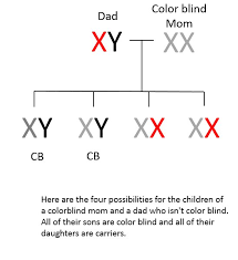 Cause Of Colour Blindness Understanding Genetics