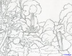 rainforest plants and trees drawing