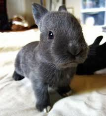 Baby Animal Memes - cute bunny pictures that will make you say aww 30 pics funny