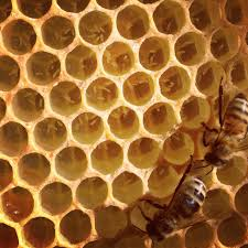 How To Get Rid Of A Beehive In Your Backyard Beekeeping Like A Signs Your Colony Is Queenless