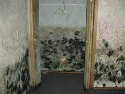 ultraviolet light to kill mold black mold in house find out how a uv light can kill mold and