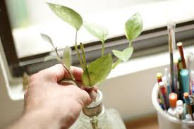 office plant how to choose a good office plant 8 steps with pictures