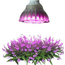 compare prices on orchid lamp online shopping buy low price