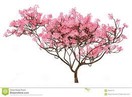 blossom trees blossom trees clipart