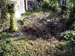nw native plants northwest native plants minerva u0027s garden blog