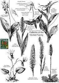 orchidaceae orchid family identify plants and flowers