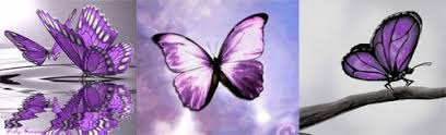 64 spiritual meaning of purple butterfly spiritual butterfly