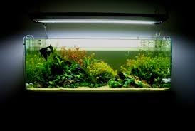 Aquascape Environmental Aquascaping World Magazine Down The River