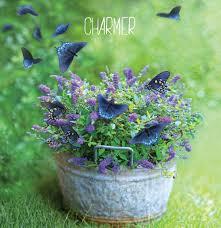 purple lilac proven winners u2013 flowering shrubs u2013 proven winners u2013 flowering shrubs