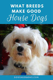 House Dogs by 255 Best Dog Breeds Images On Pinterest Animals Dog Breeds And Dogs