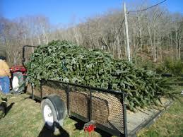 nc christmas tree farms nc mountain log cabin rental