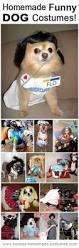 Human Dog Halloween Costumes 25 Halloween Costumes Dogs Ideas Pet