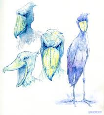 i was told to crosspost this here some shoebill stork sketches