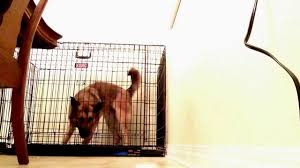 mya escapes her brand new kong kennel youtube