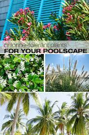 best chlorine tolerant plants s r smith blog
