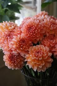 November Flowers Coral Dahlias And Classic White Gerbera Daisy Bridal Bouquet