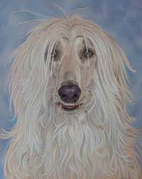 afghan hound jackets afghan painting afghan hound pinterest afghans and paintings