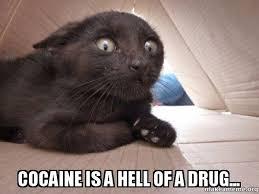 Cat Cocaine Meme - cocaine is a hell of a drug schitzo cat make a meme