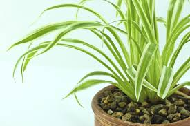 9 hard to kill indoor plants that purify the air gardentipz com