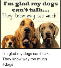 Much Dog Meme - i m glad my dogs can t talk hey know way too much fb the brunson