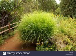 native plants albuquerque palm bush botanical garden gardens albuquerque alb alq new mexico