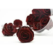 burgundy roses kiara l box of 8 burgundy